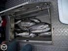 Fish Boxes