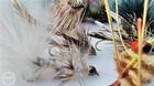 Beavertails, Photo Credit Debbie Ericson